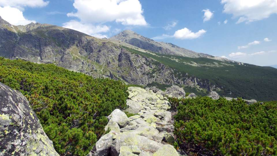 Kosodrevina