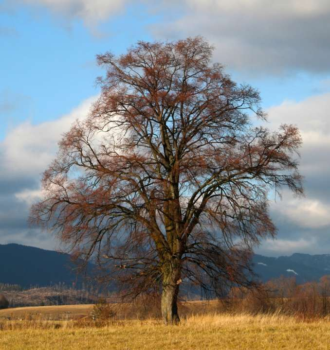 Strom jeseň