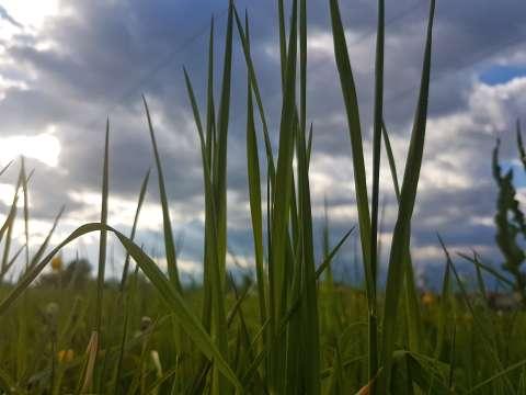 Steblá trávy