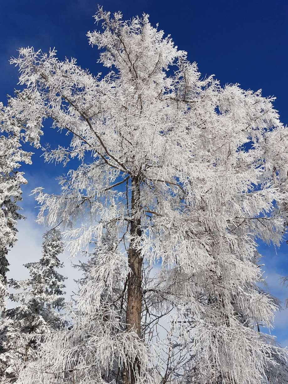 zimná srieň