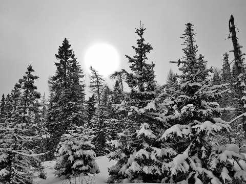 Zasnežené stromy