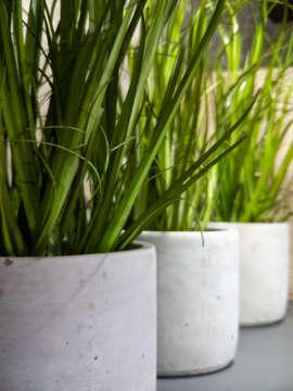 Umelé dekoračné trávy